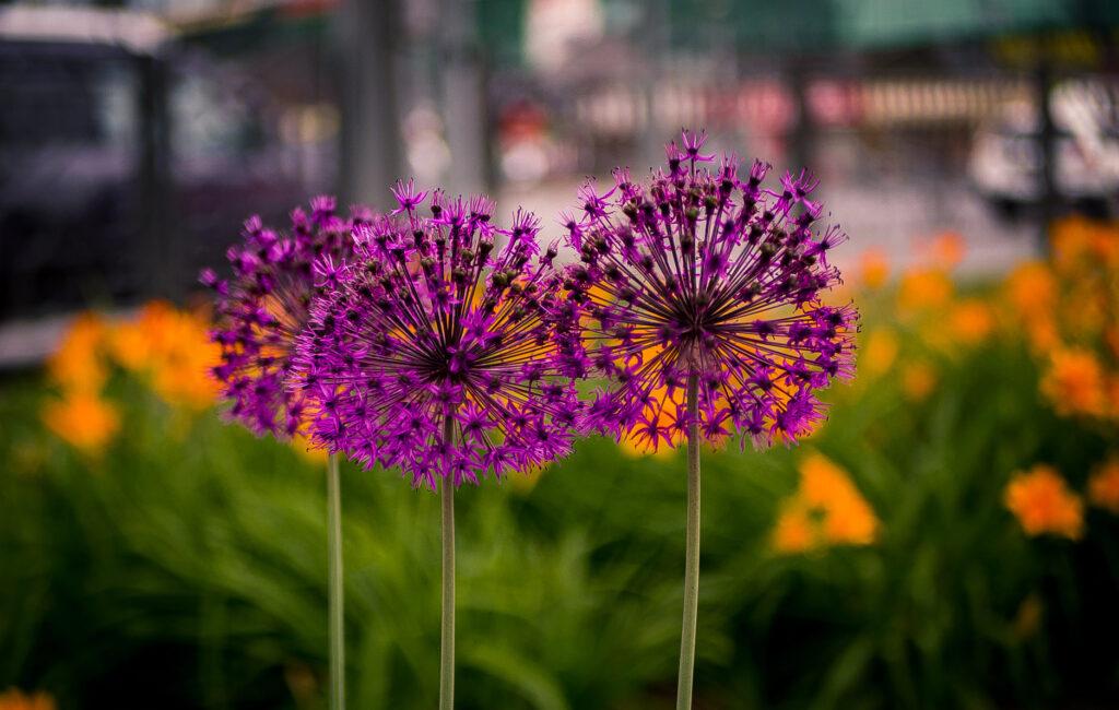 Конкурс «Красота летних цветов»
