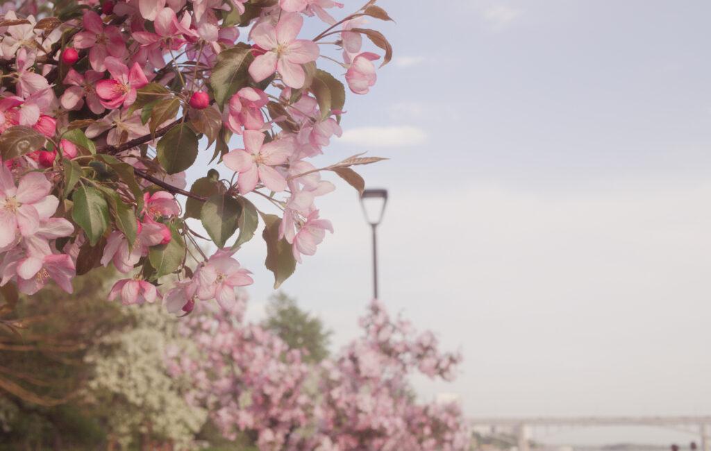 Стрит. Весна. Новосибирск