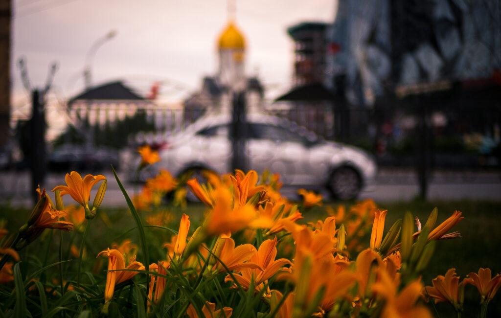 Цветы у филармонии
