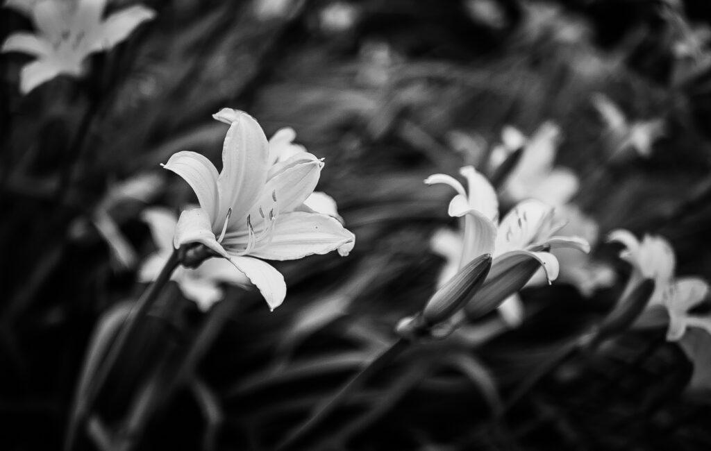 Цветы у филармонии (чб)